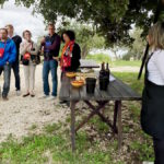 Wine Tour Sicily